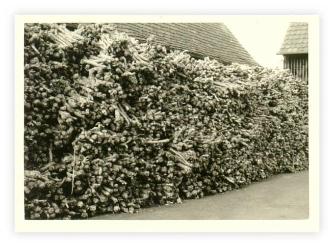 KOCHS historisches Bild der Ernte